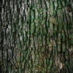 Prześliczny oraz {czysty zieleniec to nie lada wyzwanie, szczególnie jak jego konserwacją zajmujemy się sami.